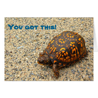 Box Turtle You Got This! Card