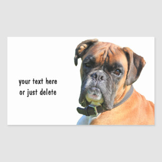 Boxer dog beautiful photo portrait custom sticker