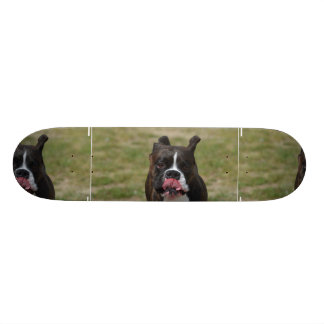 Boxer Dog Licking His Chops Skateboards
