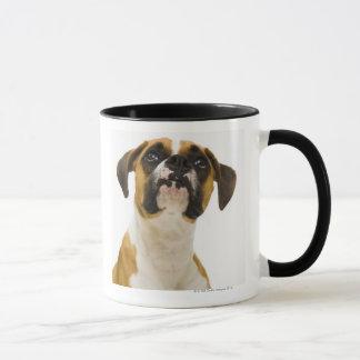 Boxer dog looking up mug