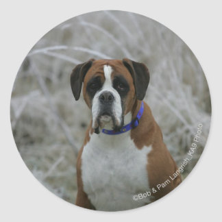 Boxer Dog Sitting in the Frost Classic Round Sticker