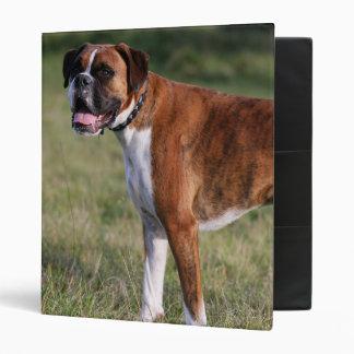 Boxer Dog Standing 3 Ring Binders