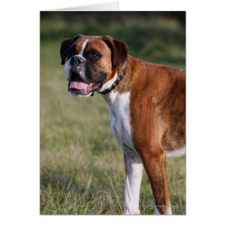 Boxer Dog Standing Card