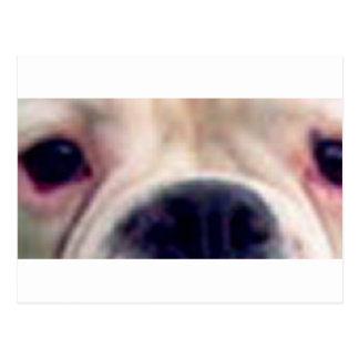 Boxer eyes white postcard