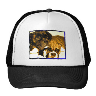 Boxer friends hat
