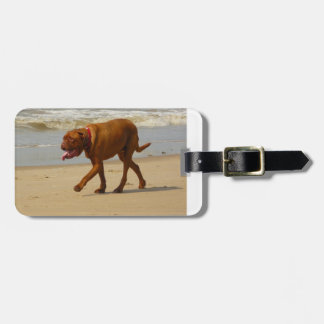 boxer on beach.png luggage tag
