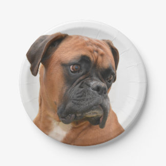 boxer paper plate