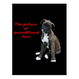 Boxer:  Picture of unconditional love Postcard