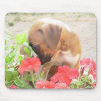 Boxer pup in Petunias mousepad