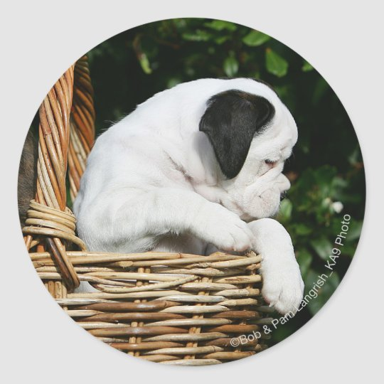 Boxer Puppies in Basket Classic Round Sticker
