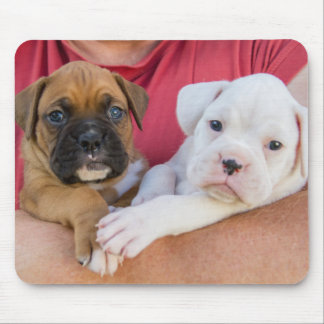 Boxer Puppies Mouse Pad