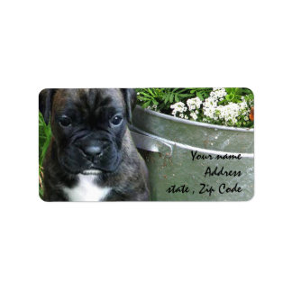 Boxer puppy label