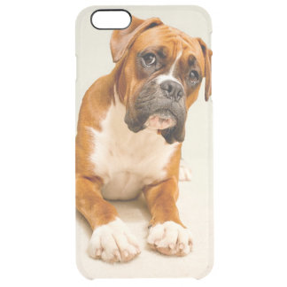 Boxer puppy on ivory cream backdrop. clear iPhone 6 plus case