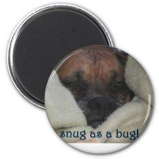 Boxer:  Snug as a Bug Magnet