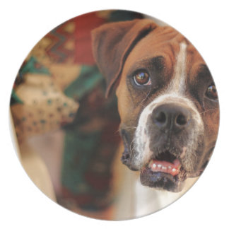 boxer's face weeping of friendly behavior plate