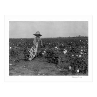 Boy Picking Cotton Photograph West, Texas Postcard