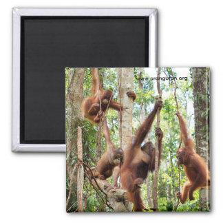 Boys in the Rainforest Hood Magnet
