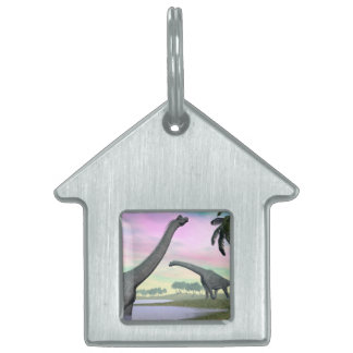 Brachiosaurus dinosaurs in nature - 3D render Pet Name Tag