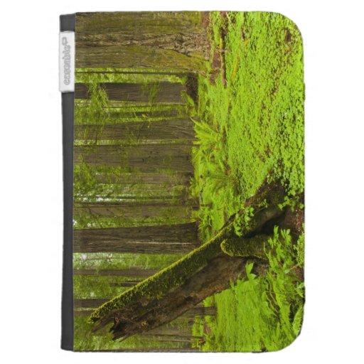 Bracken fern and redwood sorrel kindle keyboard covers