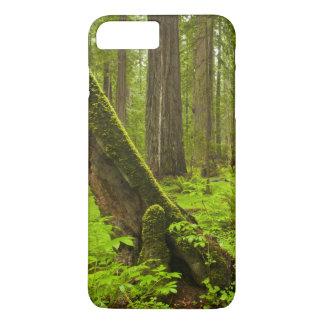 Bracken fern and redwood sorrel iPhone 7 plus case