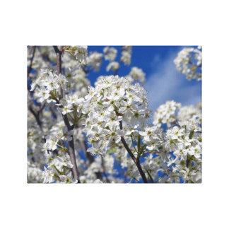 Bradford Pear Blooms Canvas Print