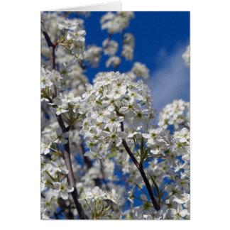 Bradford Pear Blooms Card