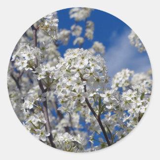 Bradford Pear Blooms Classic Round Sticker