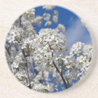Bradford Pear Blooms Coaster
