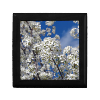 Bradford Pear Blooms Gift Box