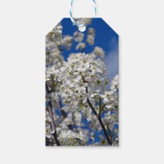 Bradford Pear Blooms Gift Tags