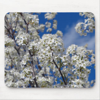 Bradford Pear Blooms Mouse Pad