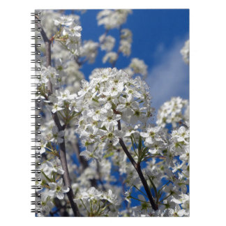 Bradford Pear Blooms Notebooks