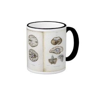 Brain anatomy print mug