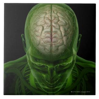 Brain Arteries Ceramic Tiles