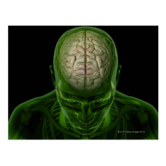 Brain Arteries Postcard