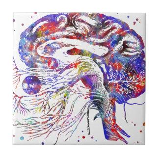 Brain cranial nerves, brain cranial nerves tile