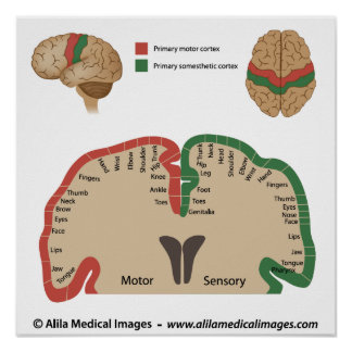 Brain map medical drawing posters