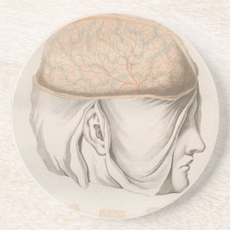 Brain One - Neuroanatomy Drink Coaster