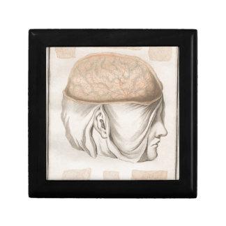 Brain One - Neuroanatomy Gift Box