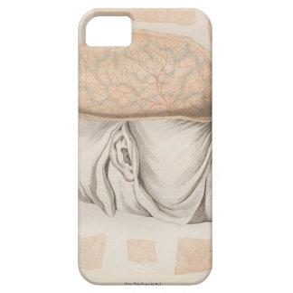Brain One - Neuroanatomy iPhone 5 Cover