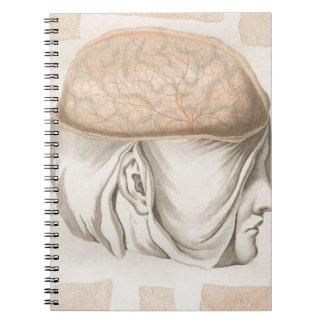 Brain One - Neuroanatomy Notebooks
