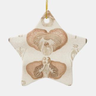 Brain Three - Neuroanatomy Ceramic Star Ornament
