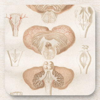 Brain Three - Neuroanatomy Coasters