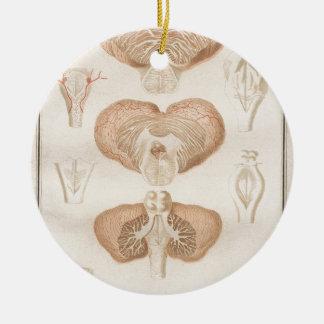 Brain Three - Neuroanatomy Round Ceramic Ornament