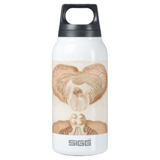 Brain Three - Neuroanatomy SIGG Thermo 0.3L Insulated Bottle