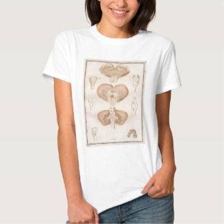 Brain Three - Neuroanatomy Tee Shirt