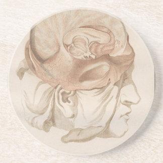 Brain Two - Neuroanatomy Coaster