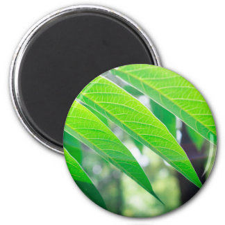 Branch ailanthus with narrow leaves 2 inch round magnet