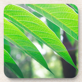 Branch ailanthus with narrow leaves beverage coasters