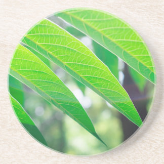 Branch ailanthus with narrow leaves coasters